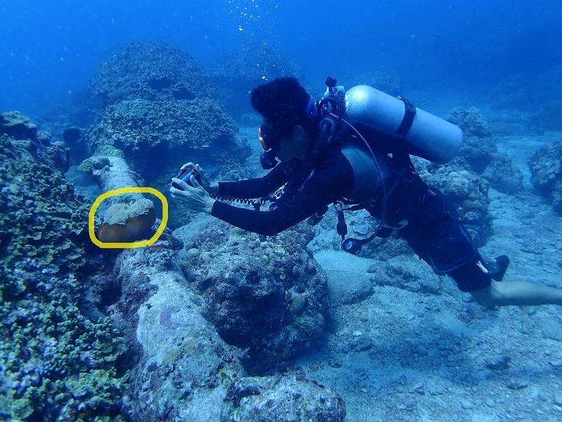 水中カメラを持って被写体に近づくダイバー
