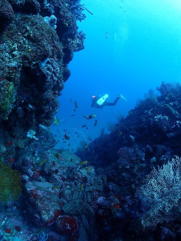 岩と岩の間を泳ぐダイバー