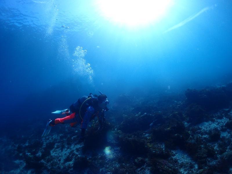 中性浮力で泳ぐダイバー