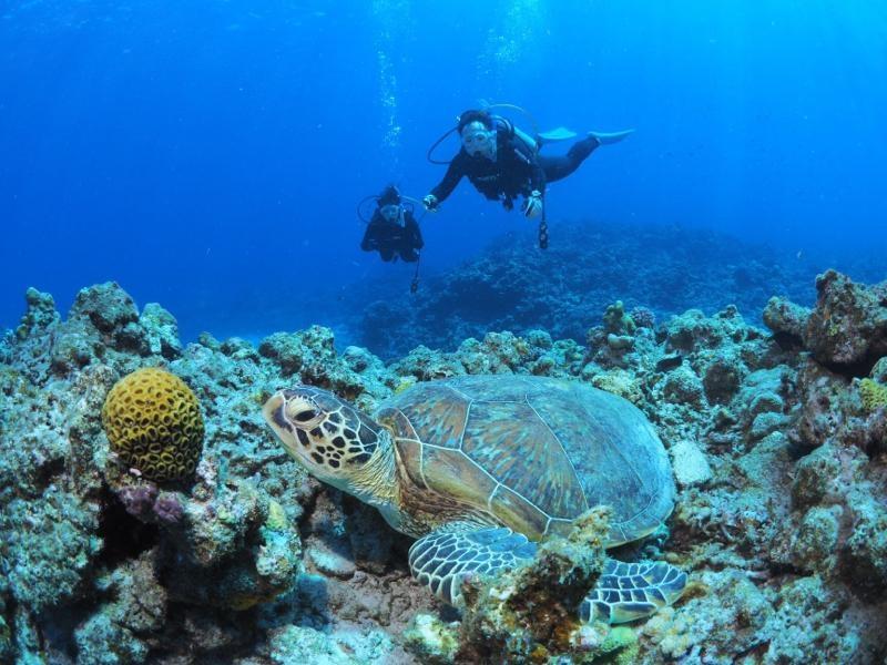 沖縄慶良間諸島のウミガメ