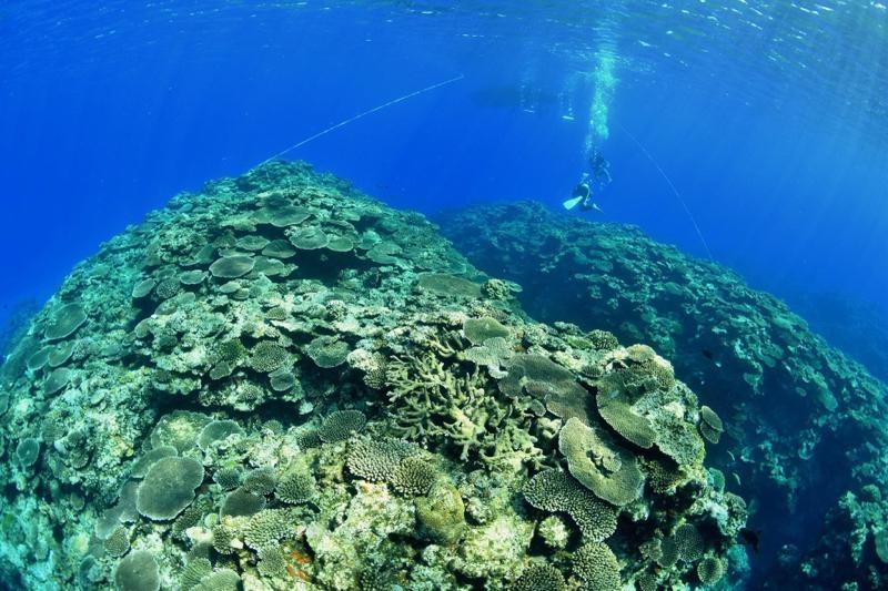 フリー潜降するダイバー